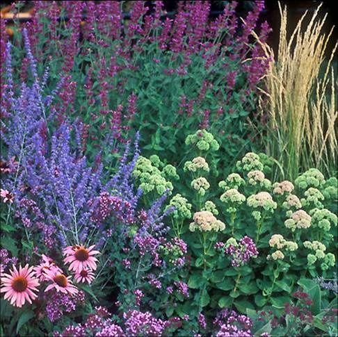 drough tolerant landscaping ideas | Smart Drought Tolerant Garden Designs : Lamidge