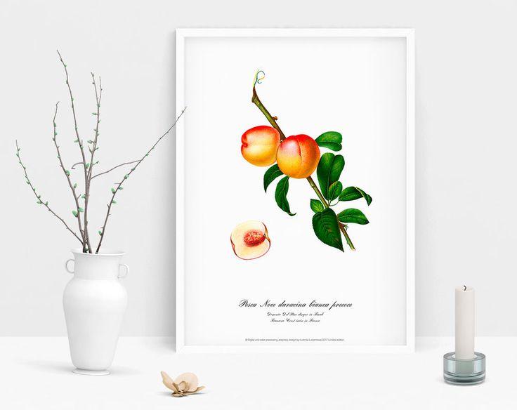 Peach art print Botanical watercolour vintage picture antique poster home poster #Vintage