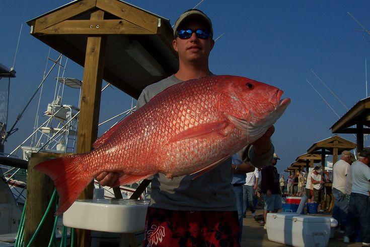 57 best sweet home alabama images on pinterest sweet for Alabama deep sea fishing