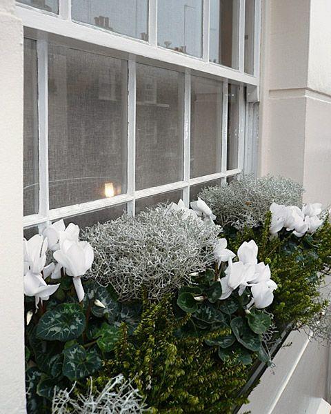 from a modest windowbox roof terrace to borders jensu0027 seasonal planting ideas will bring joy through every season - Window Box Planters