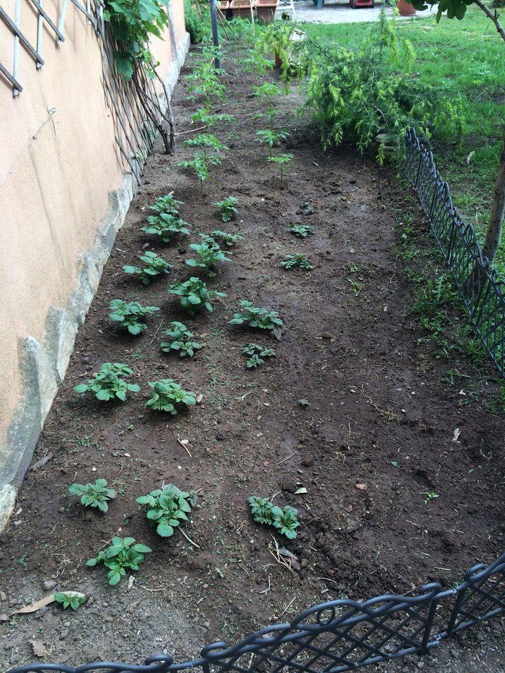 La cura giornaliera del mio orto è una pratica che rilassa e mi riempie moltissimo