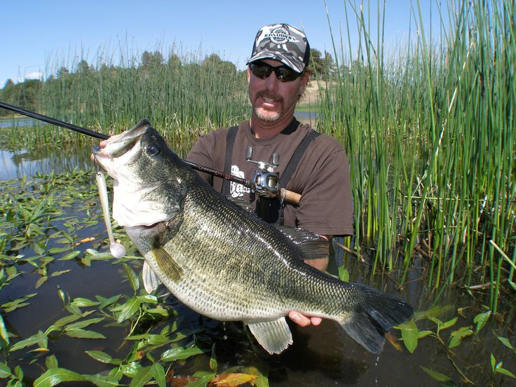 236 best pond life images on pinterest crappie fishing for Bass fishing ponds