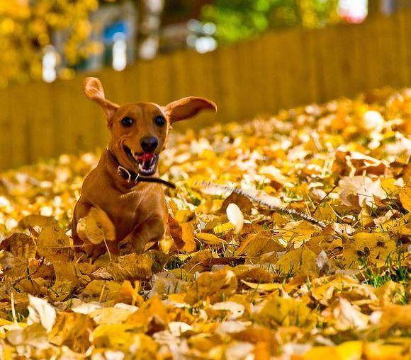 Pořízením nábytku v barvách podzimu vykouzlíte úsměv na tváři nejen Vám
