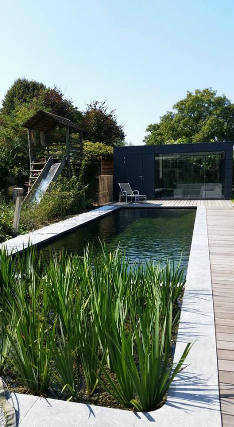 tight swimming pool, wood decking & plants add natural elements