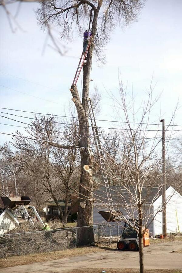 84-Year-Old Man Gets His YOLO On And Climbs Ladder Balanced On Tree Branch (Photo)