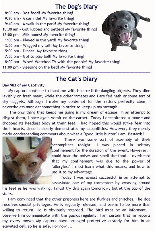 Cat and Dog Diary Entries