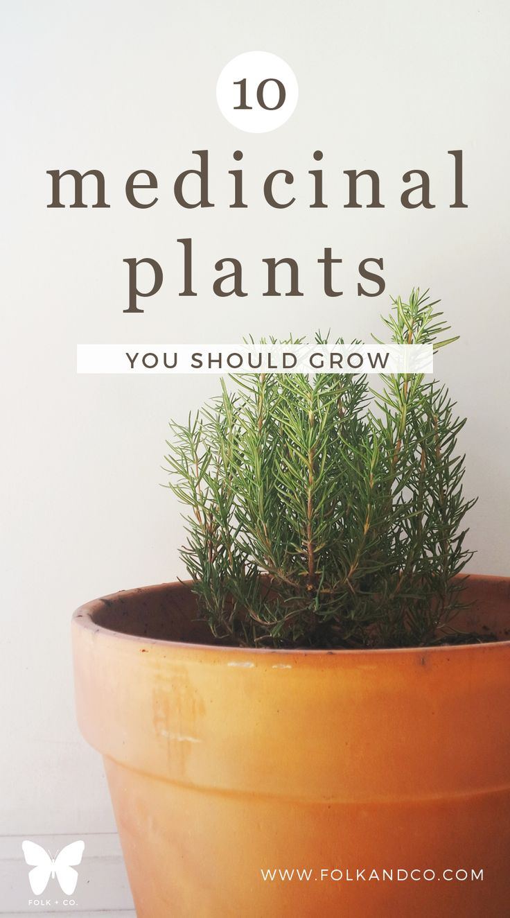 10 Medicinal Plants You Should Grow -- The more I learn about plants the more I…