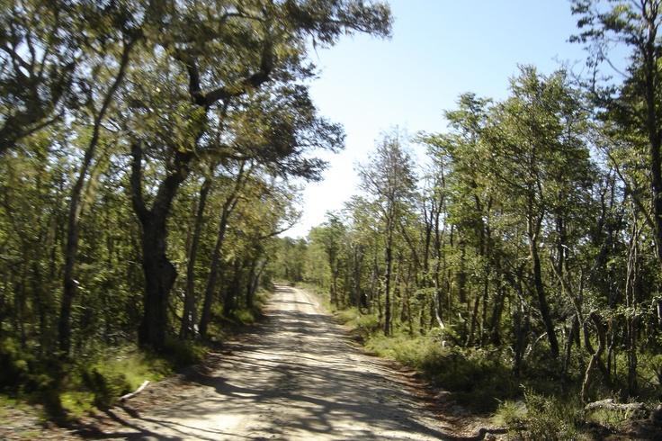 Camino interior del parque.