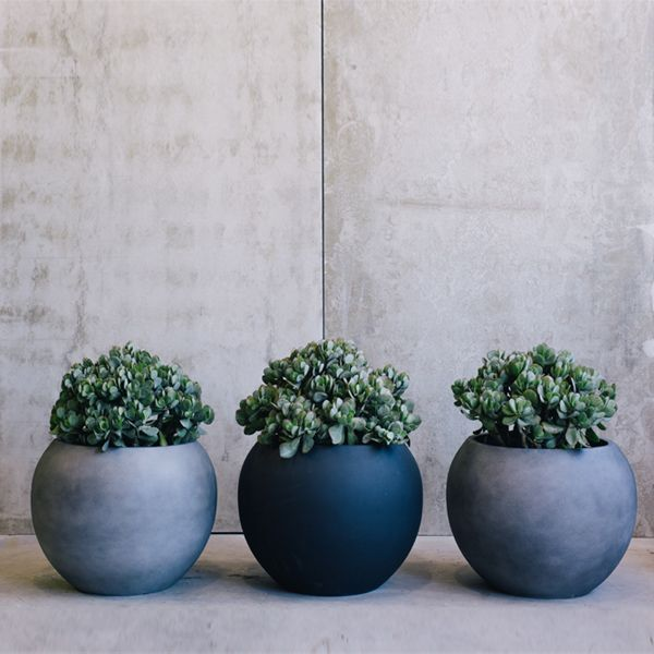 contemporary topiary in box planter atelier vierkant - Google Search