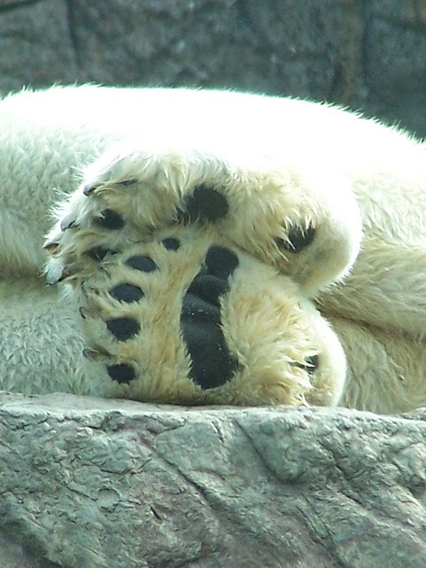 I love feet by tammyjq41, via Flickr A great resource for bear paw details! :o)