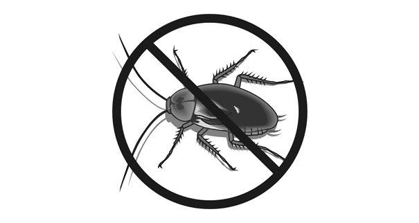 شركة اسكانكو كلين لمكافحة الحشرات في أبها
