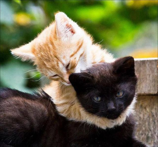 7 Best 45 Irresistibly Cute Photos Of Animals Hugging