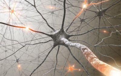 nerve_cell_regeneration