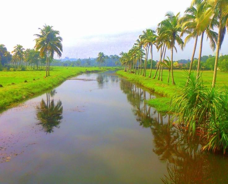 Natural beauty of Kerala   #kerala