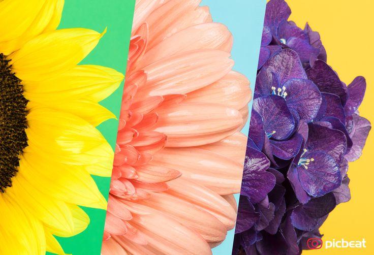 """""""Manchmal ist es dunkel und manchmal ist das Leben so richtig bunt.""""  So geht es uns allen und immer hält das Leben ein paar wundervolle Motive für die richtigen Momente für uns bereit. Hier meine Motive für ein graues Wochenende dass uns die Power für gute Laune mitgibt ;)  Wünschen Euch ein schönes Wochenende  Euer #picbeat Team / Alex  #blumen #colorful #wochenende #friede #freude #eierkuchen"""
