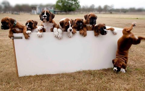 #Boxers party
