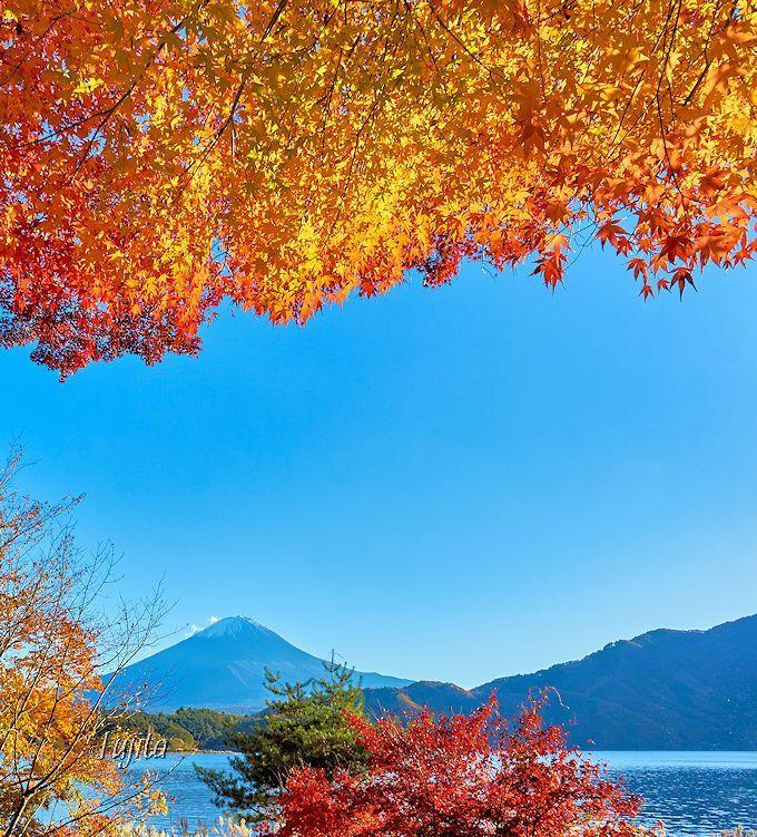 富士山と河口湖と紅葉がコラボ!「もみじトンネル」と「もみじ回廊」 | 山梨県 | Travel.jp[たびねす]