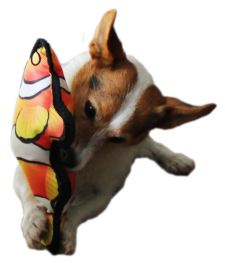 Floating Tropical Fish Dog Toy. Great no plush, very colourful lightweight dog toy.