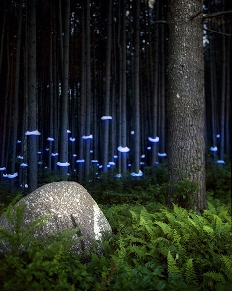 Photo Series Electrifies The Wilderness And City With Vibrant LEDs | The Creators Project