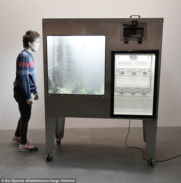 [HF][Fixed][Future Resilience] The Fly Factory by Búi Bjarmar (Insect as Food):The chocolate cake made from INSECTS: Factory creates meals using larvae - and claims diners can't tell the differences.