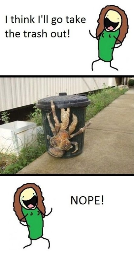 The thing on the garbage can is a coconut crab. A bigger-than-your-head coconut crab.NOPE!
