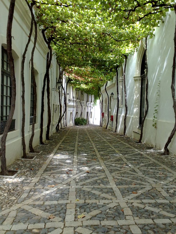 Street covered with vines inside the Gonzalez Byass wineries, Jerez de la Frontera, Cadiz, Andalucia, Spain. This company produces the famous sherrys Tio Pepe, Soberano, Lepanto.
