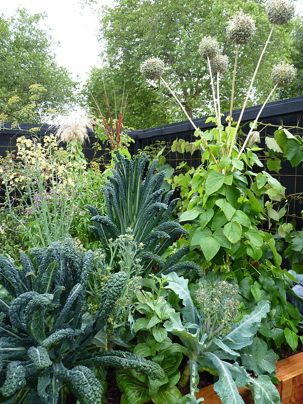 The cabbage family & a bean frame made from elephant garlic flower heads | HEDGE Garden Design & Nursery Potager (ornamental vegetable/kitchen garden)