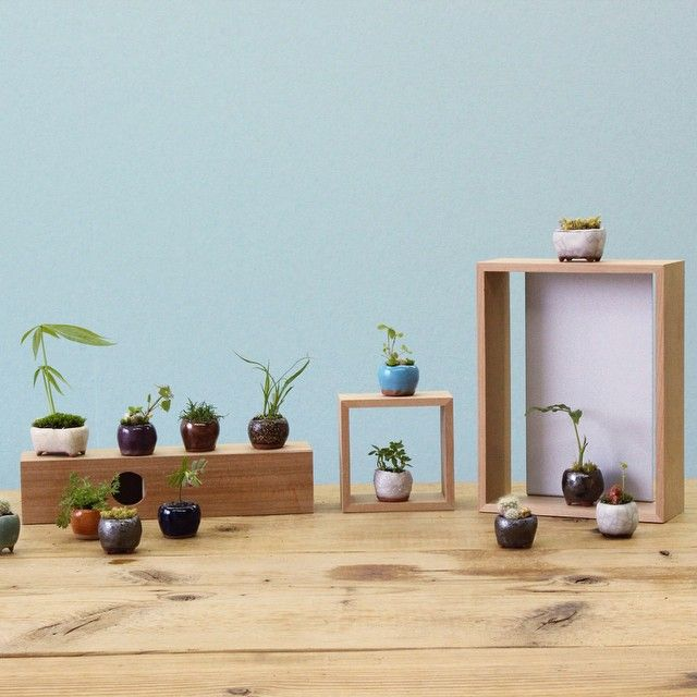 """""""frame scape"""" Planted wild greases into little pot."""