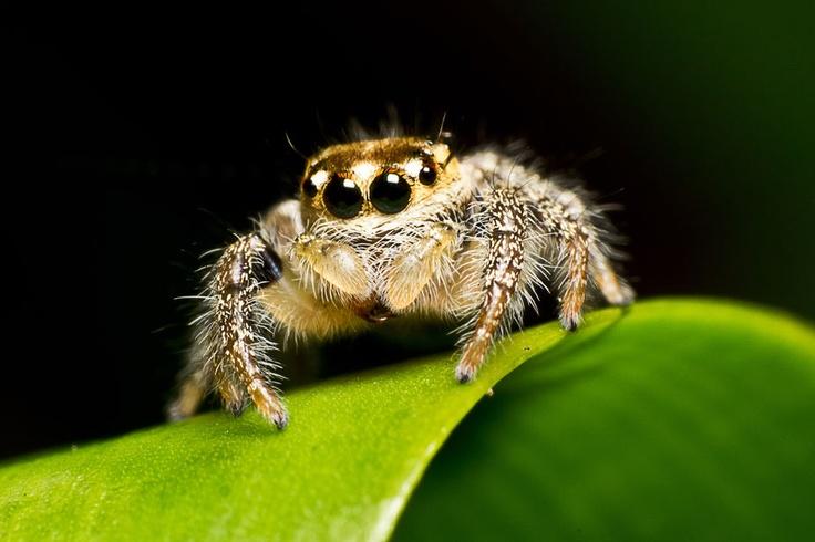 spider jump II