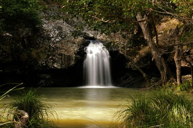 Kondalilla Falls swimming hole. A must visit attraction just 30 mins drive from our central location in Maroochydore!