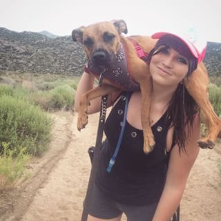 This piggy backing pooch enjoying a relaxed hike. | 19 Magnificent Mutts You'll Wish Were Yours