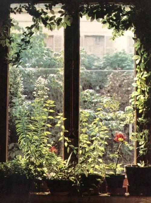 .: Window View, Outdoor Plants, Peace Gardens, Gardens Window, Modern Gardens Design, Window Dresses, Outdoor Gardens, The Secret Gardens, Beautiful Gardens