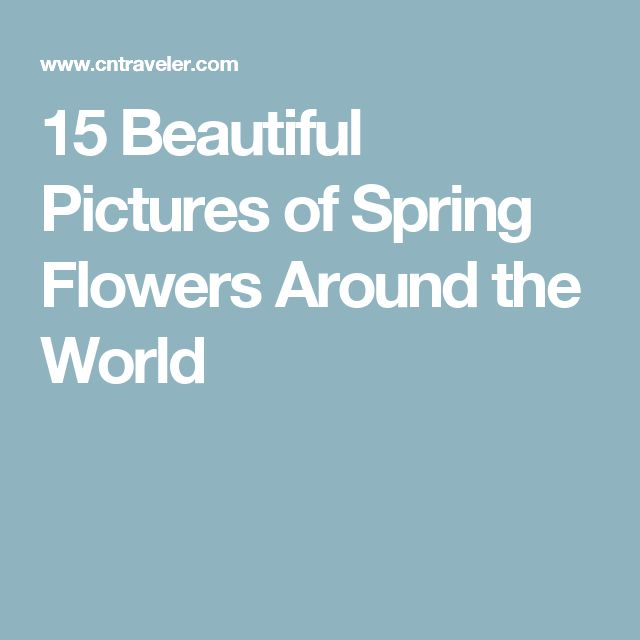 15 Beautiful Pictures of Spring Flowers Around the World