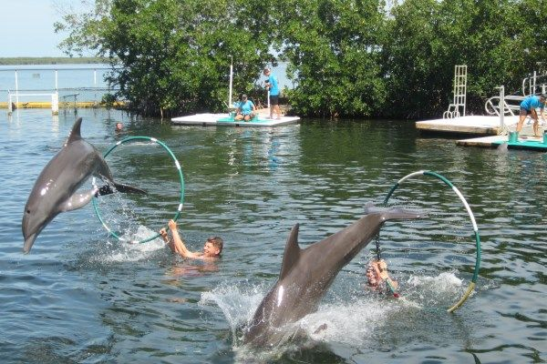 """Swimming with dolphins at """"Dolphin Cove"""", Key Largo, Florida."""