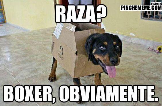Se ve clarito !! Imagenes de risa 2016 Mega Memeces Más en I➨ http://www.megamemeces.com/memeces/imagenes-de-risa-2016