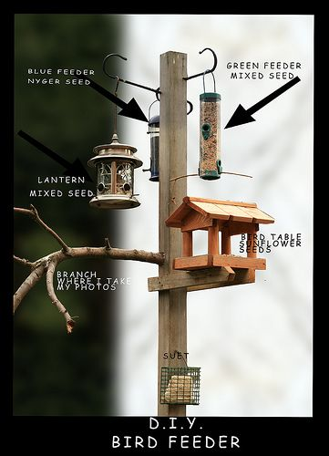 Flickr: bird feeder Timeline