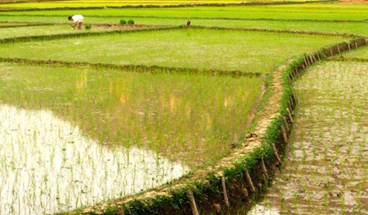 السعودية ترفع الحظر على استيراد الفراولة والفلفل من مصر أعلنت وزارة الزراعة المصرية أن السعودية قررت رسميا رفع الحظر على صادرات مصر من Rice Farmland Outdoor