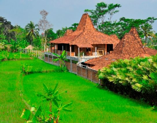 Javanese traditional house and ricefields #Javanese #traditional #house #ricefields