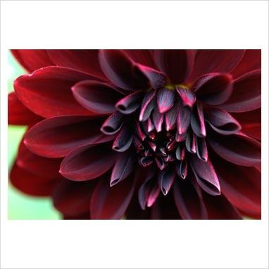 17 best images about my dark secret garden on pinterest. Black Bedroom Furniture Sets. Home Design Ideas