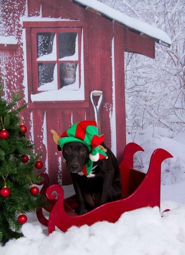 The Saddest Christmas Elf | The 100 Most Important Dog Photos Of All Time