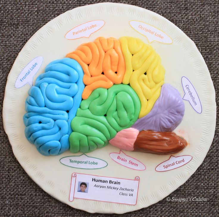Human Brain with Fondant I made for my son's Annual School Exhibition :) :)