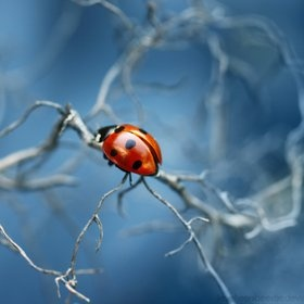 Blue octoberBlue October, Nature, Macro Photography, Colors, Ladybugs, Insects, Lady Bugs, Inspiration Quotes, Animal