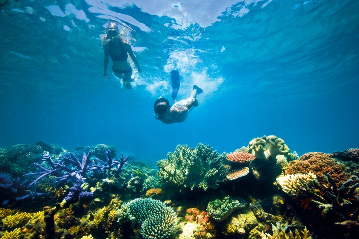 Snorkelling or diving the Great Barrier Reef.    Find out more about the Great Barrier Reef   http://www.queenslandholidays.com.au/experiences/great-barrier-reef/great-barrier-reef_home.cfm?cmpid=1996