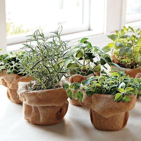 party decor green herbs - Pesquisa Google