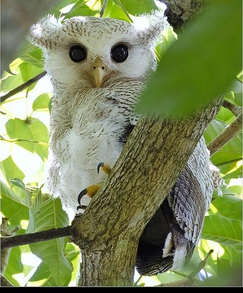 ~* Beautiful Little Owl *~