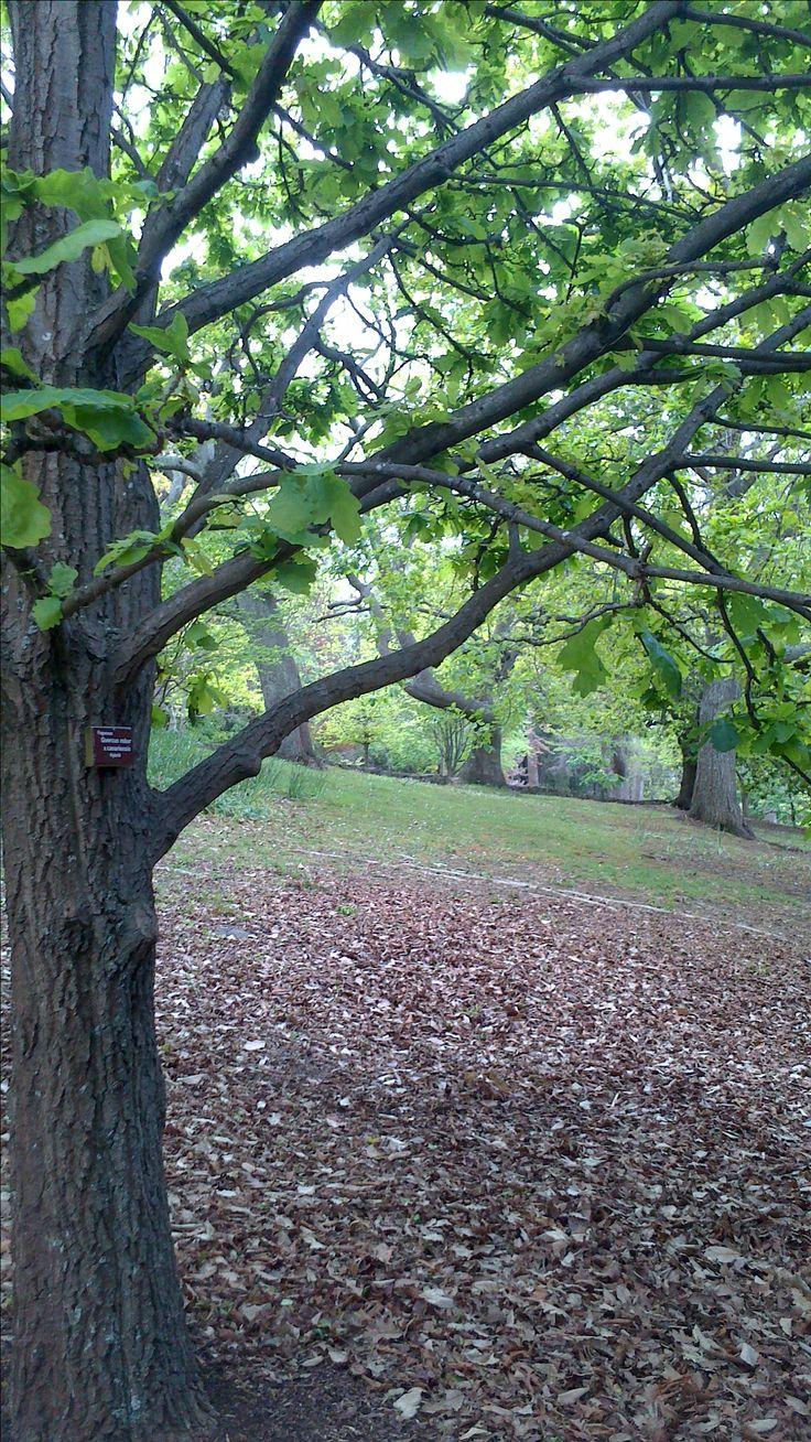 Hobart Botanical Gardens Oct 2016