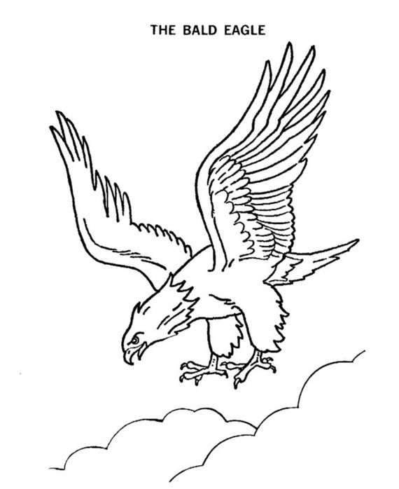 Add Fun Veterans Day Coloring Pages For Kids Eagle Drawing