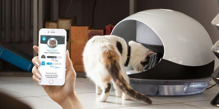 the smart food & water dispenser handles your cat  #ctband #innovation #Catspad #iot #JnB