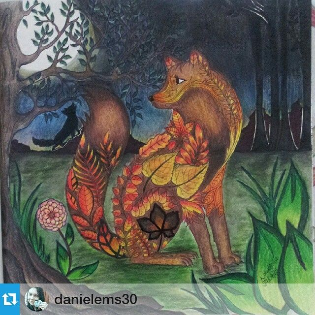 Fox From Enchanted Forest Colouring Book