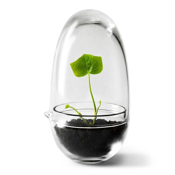 Grow miniväxthus i gruppen Rum / Kök / Inredningsdetaljer kök hos RUM21.se (115478)